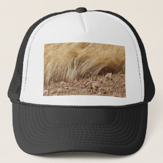 Detail of a teff field during harvest trucker hat