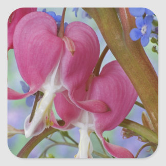 Detail of bleeding hearts and Brunnera Jack Square Sticker