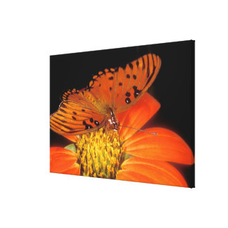 Detail of captive gulf fritillary butterfly on gallery wrap canvas