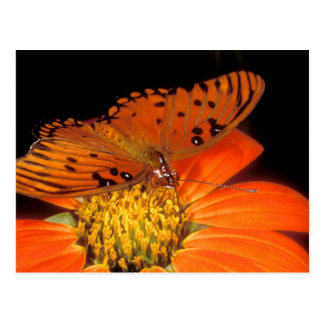 Detail of captive gulf fritillary butterfly on postcard