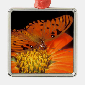 Detail of captive gulf fritillary butterfly on Silver-Colored square ornament