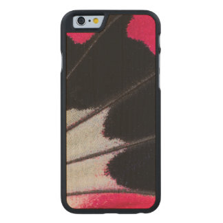 Detail Wing Pattern of Tropical Butterfly Carved Maple iPhone 6 Case