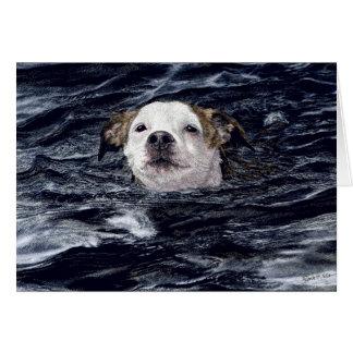 """Determination"" - Swimming Dog Card"