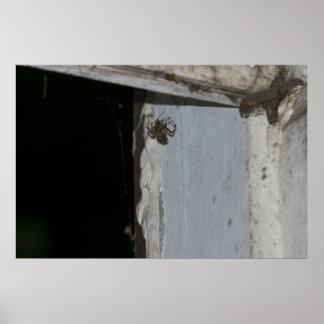 Deux araignées poster