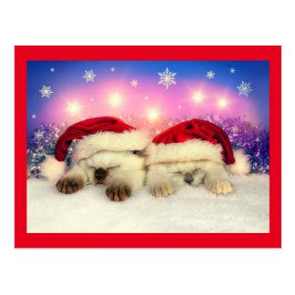 Deux chats mignons avec le casquette de Père Noël Cartes Postales