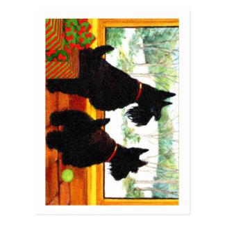 Deux chiens de Scotty à Noël Carte Postale