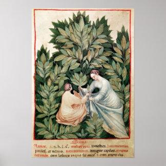 Deux femmes sélectionnant la sauge, de 'Tacuinum Posters