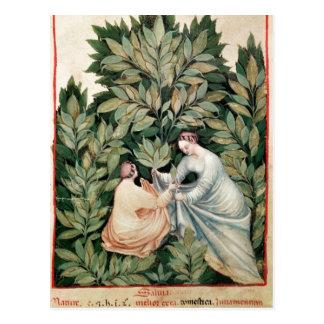 Deux femmes sélectionnant la sauge, de 'Tacuinum Carte Postale