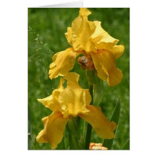 Deux iris jaunes carte de vœux