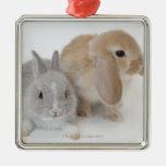 Deux lapins. Nain et la Hollande Lop. de Netherlan Décoration De Noël