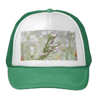 Developing Seed Pods - Bittercress Trucker Hat