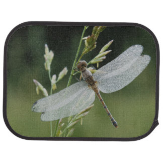 Dew covered Darner Dragonfly Auto Mat