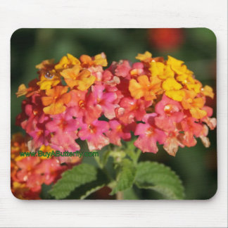 Dew Covered Lantana Flowers Mouse Pad