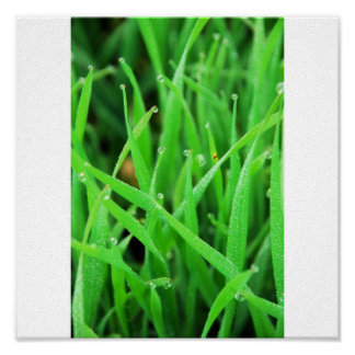 Dew Crowned Grass Poster