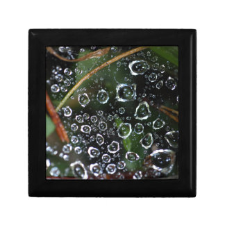 Dew drops in a spider net gift box