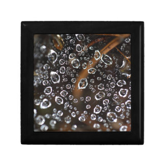 Dew drops in a spider net jewelry box