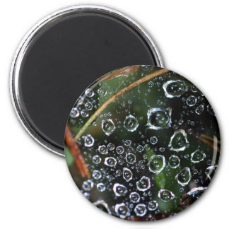 Dew drops in a spider net magnet