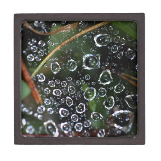 Dew drops in a spider net premium jewelry boxes