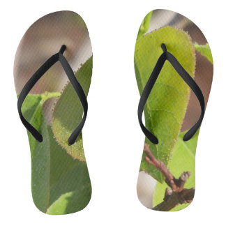 dew drops lined up on a Tallow tree leaf Flip Flops