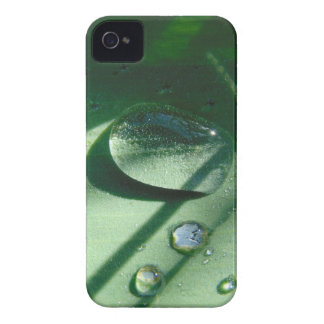 Dew Drops On A Tulip Leaf iPhone 4 Case-Mate Case