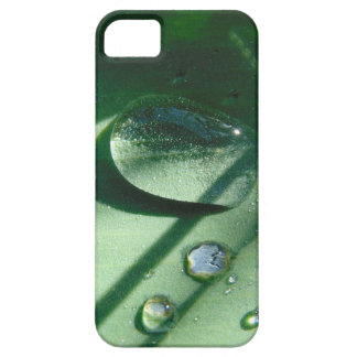 Dew Drops On A Tulip Leaf iPhone 5 Cases