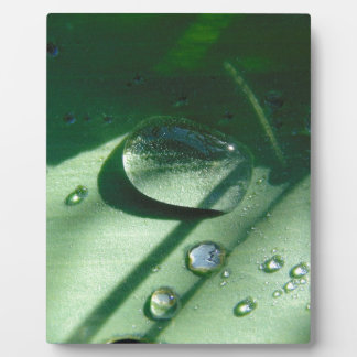 Dew Drops On A Tulip Leaf Plaque