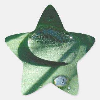 Dew Drops On A Tulip Leaf Star Sticker