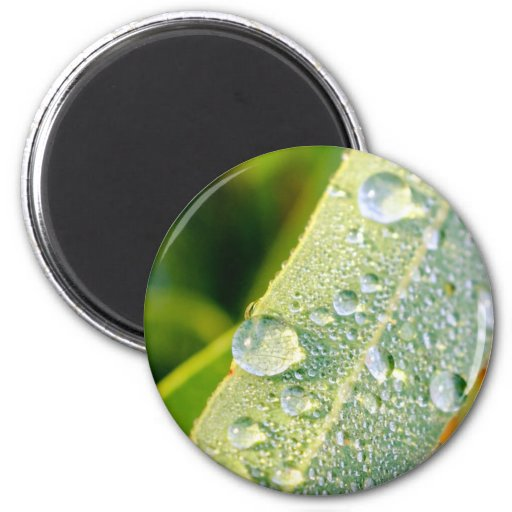 Dew Drops on Green Eucalyptus Leaf Fridge Magnets