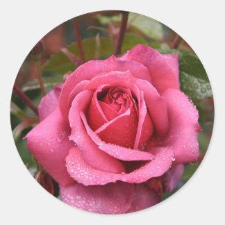 Dew Kissed Pink Rose Classic Round Sticker