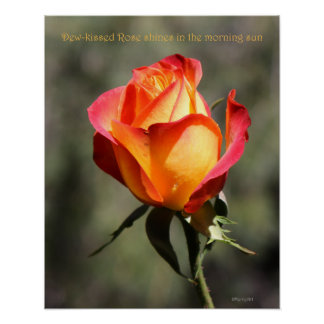 Dew-kissed Rose Poster 16x20 ROSE & PROSE