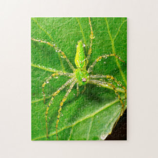 Dew on a Green Lynx Spider Puzzles