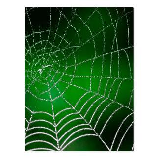 Dew on spiderweb postcard