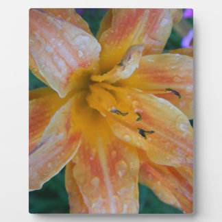 Dewed Tiger Lily Plaque 8x10 With Easel
