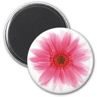 Dewy Pink Gerbera Flower Magnet