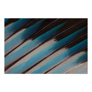 Diagonal Blue-Bellied Roller Feather Design Poster