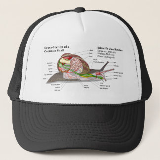 Diagram of a Common Garden Snail (Helix aspersa) Trucker Hat