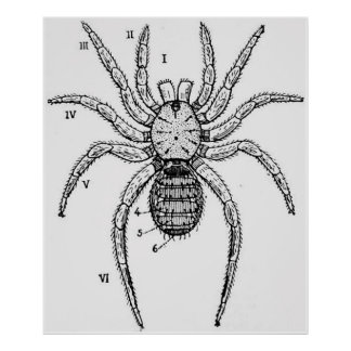 Diagramme vintage d'araignée poster