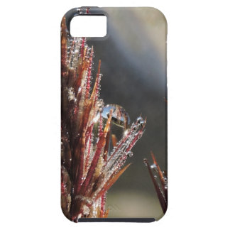 Diamond trees case for the iPhone 5