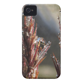 Diamond trees Case-Mate iPhone 4 case