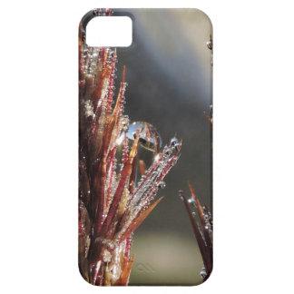 Diamond trees iPhone 5 covers