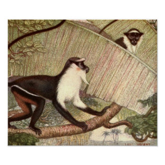 Diana Monkey by Louis Sargent, Vintage Wild Animal Poster