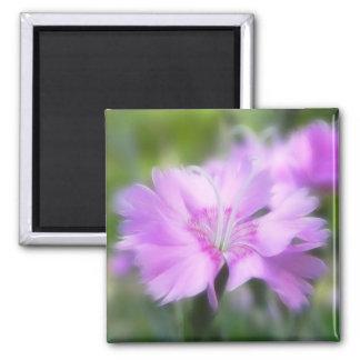 Dianthus Plumarius Flower Magnet