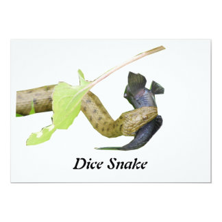 Dice Snake Personalized Announcements