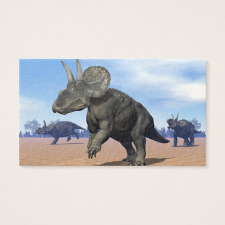 Diceratops/nedoceratops dinosaurs in the desert business card