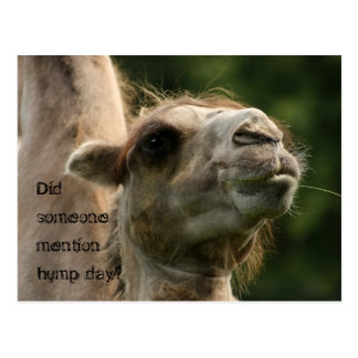 Did Someone Mention Hump Day? Postcard
