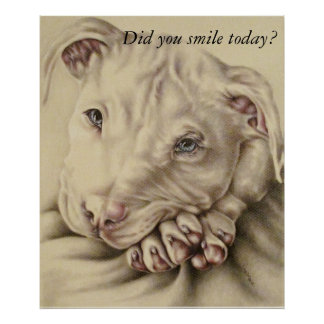 Did You Smile Today? White Pit Bull Poster
