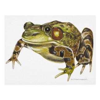Digital illustration of Green Frog Postcard