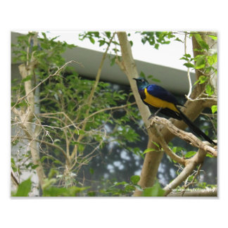 Digital Photograph Exotic Bird Print