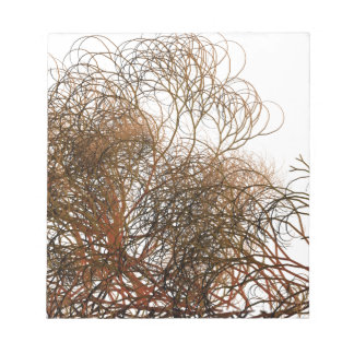 Digitally painted colourful winter branches illust notepads