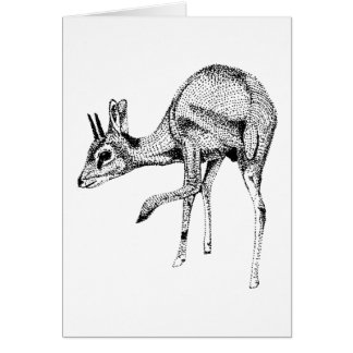 Dik Dik study Birthday Card